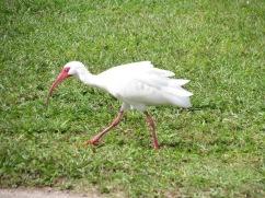A crane-ish bird near the fields